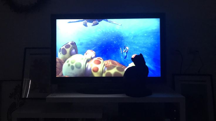 I was watching Finding Dory and it looks like Dory is staring at the cat. I thought it was pretty cool then I remembered I don't own a cat... http://ift.tt/2rg5zvR