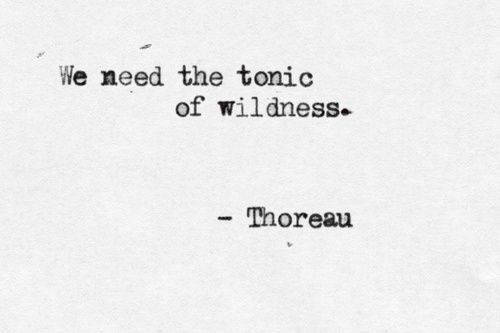 the tonic of wildness//