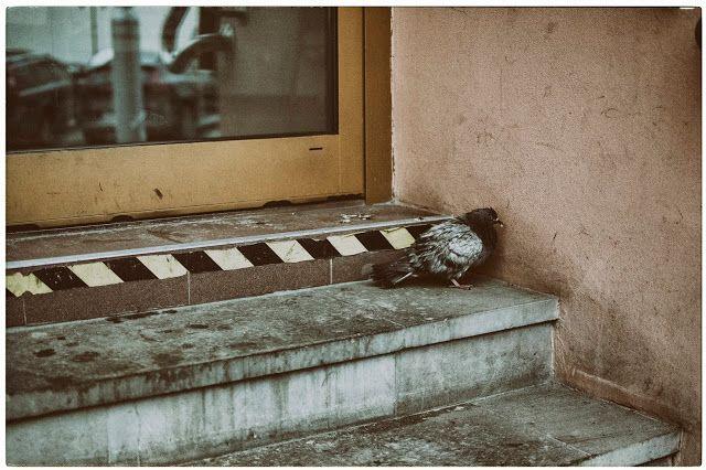 Goya Kusz: Oblicze samotności