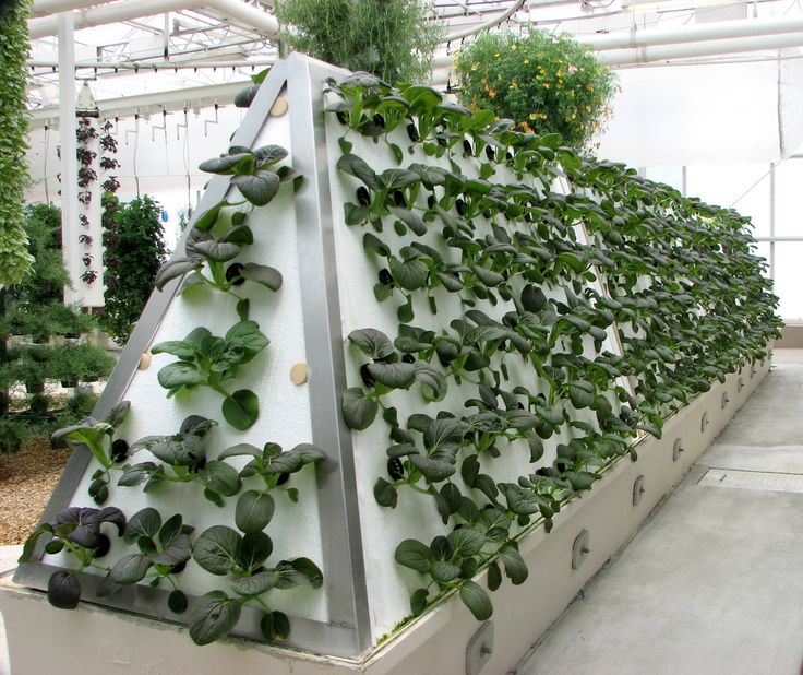 Etonnant 10 Short Guidelines About Growing Hydroponic. The Records Of Growing  Hydroponic.
