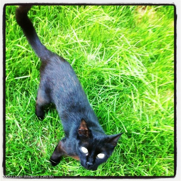 Pet portrait #black #cat #pet #intercer #romania