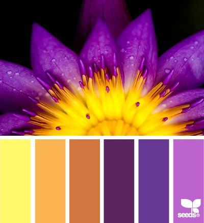Flora hues friendship kitchen colors and the purple - Purple and gold color scheme ...