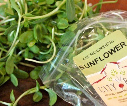 Microgreens Bunga Matahari (Sunflower)