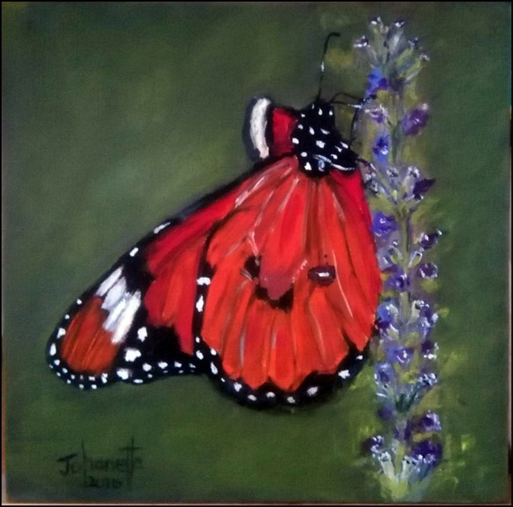 211Skoenlapper Stretched Canvas 300x300x40mm