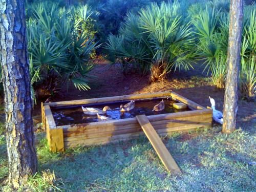 how to build a duck pond in your backyard
