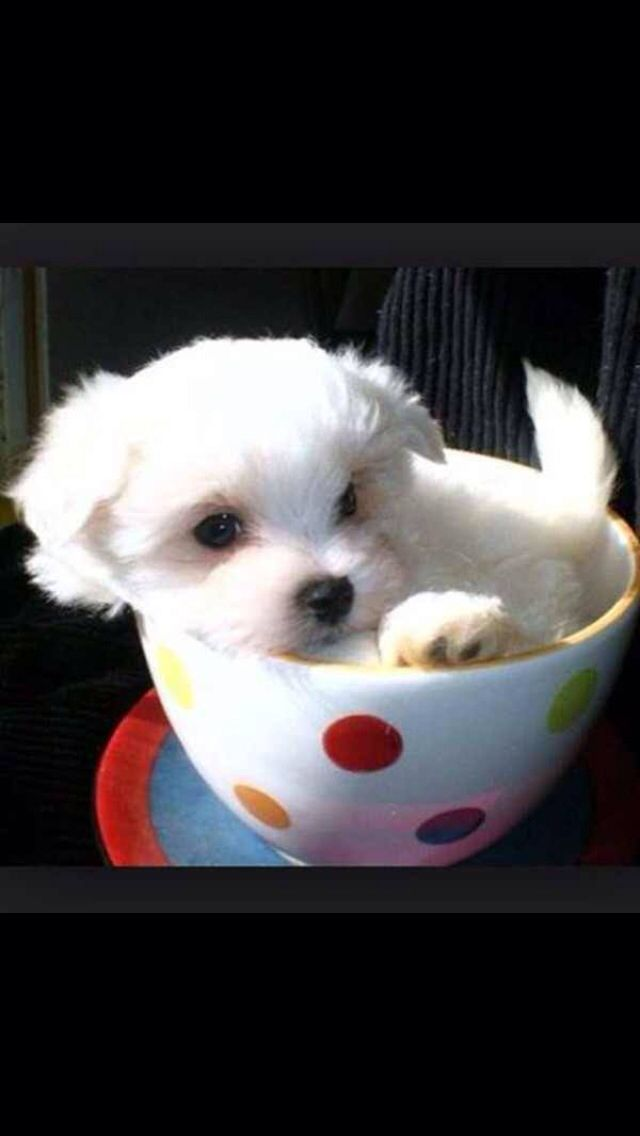 Cutes puppy ever #puppy #pup