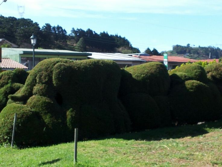 Zarcero topiary garden. Interesting sculptures but not real maintained.