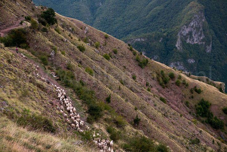 De schaapherders in de bergdorpjes van Bosnië Herzegovina gaan dagelijks met hun dieren op stap. #photography #travelphotography #fotografie #canon #canonnederland #canon_photos #panasonic #travelling #travelblog #reizen #reisjournalist #travelwriter #fotoworkshop #willemlaros.nl #reisfotografie #willemlaros #tw #fb #treinreiswinkel  #moto73 #motor #suzuki #v-strom #MySuzuki #motorbike #motorfiets #herzegovinalodges #lovecroatia #mijn_slovenie #bosnie