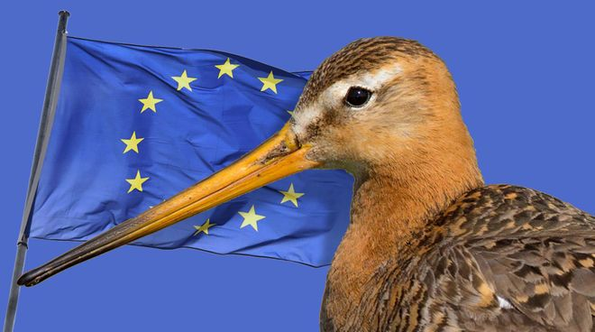 Tell the EU to prevent a Silent Spring! >  https://www.rainforest-rescue.org/petitions/1054/tell-the-eu-to-prevent-a-silent-spring