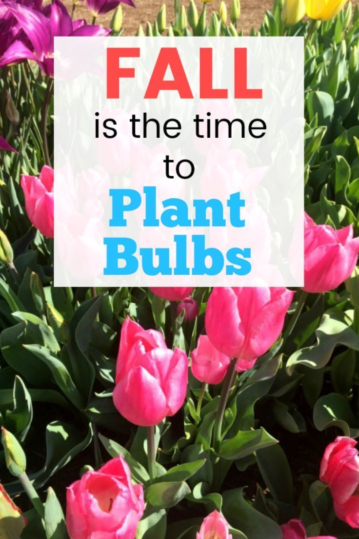 38++ When is the best time to plant bulbs information