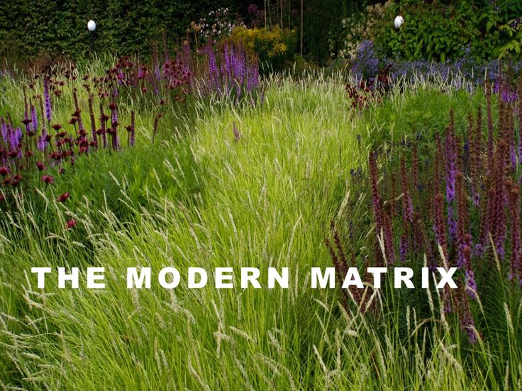 147 best images about or ntal grasses gardens grasses and perennials