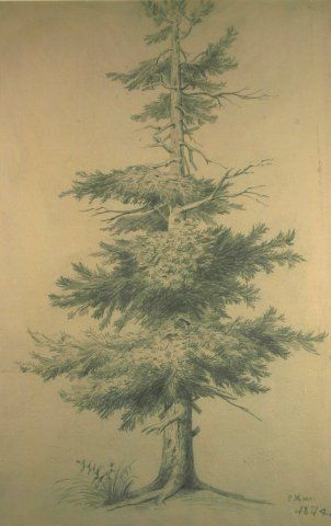 Jack Pine, 1874, Carl von Marr, Museum of Wisconsin Art, 0052.
