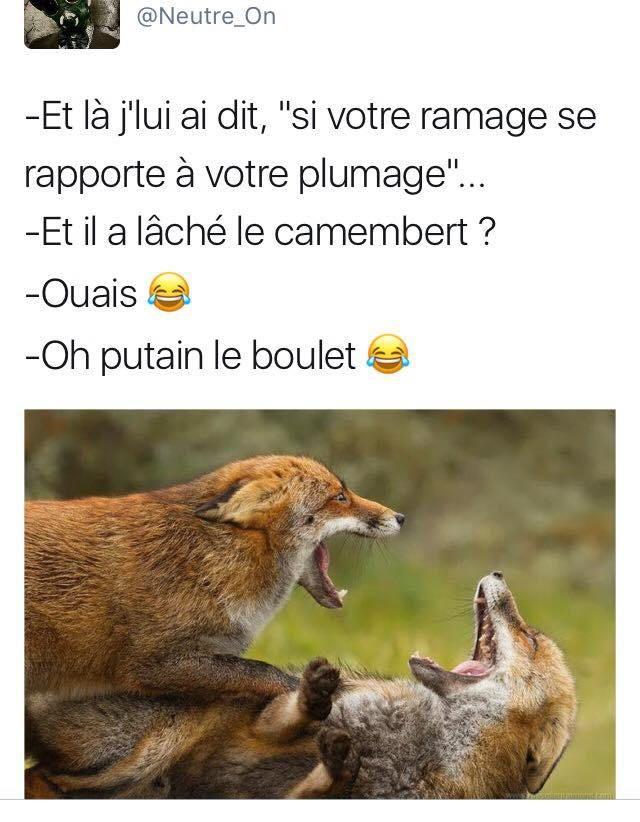 ça me fait tellement rire ! https://www.15heures.com/photos/p/40667/