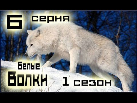 Сериал Белые волки 6 серия 1 сезон 1 14 серия   Русский сериал HD