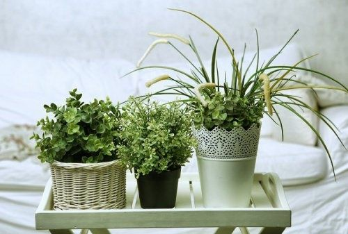5 plantes à mettre dans la chambre pour trouver le sommeil