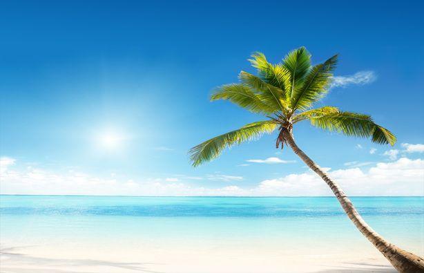 Fotobehang tropisch strand met palmboom