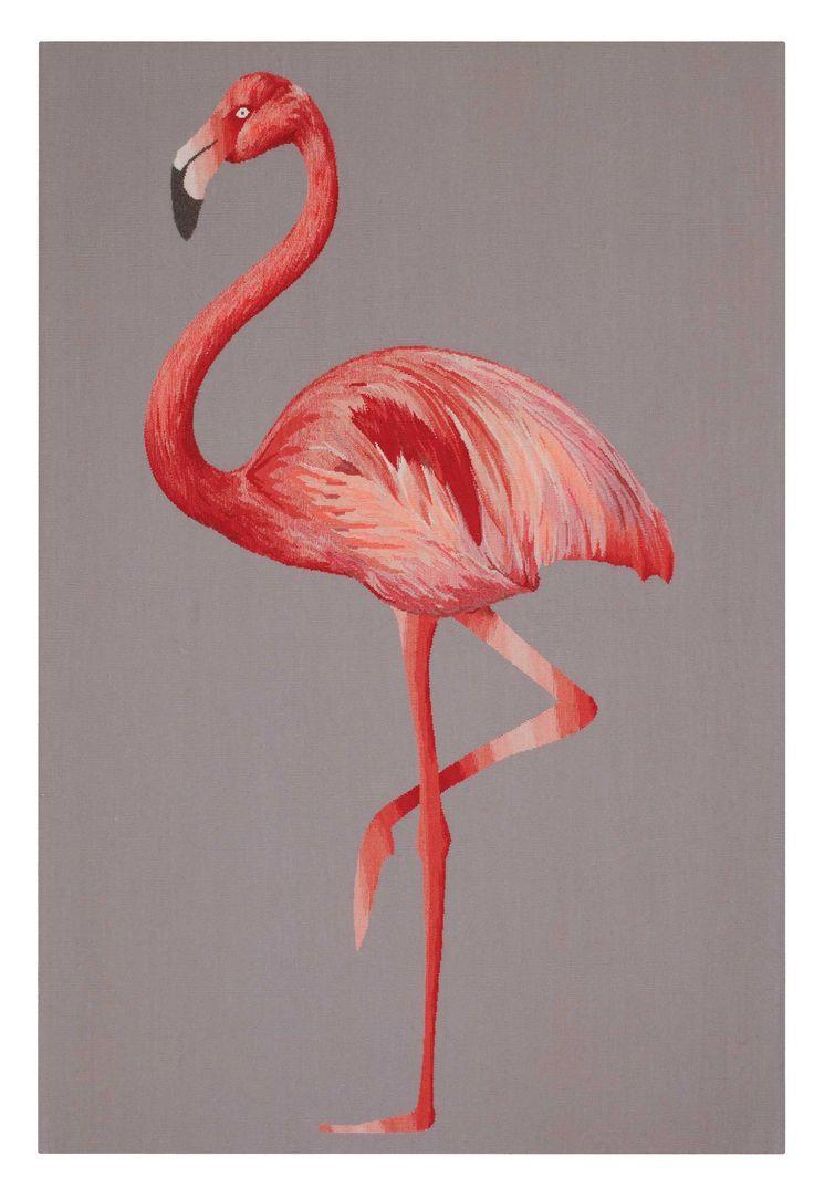 Resultado De Imagem Para Imagens De Flamingo Aves