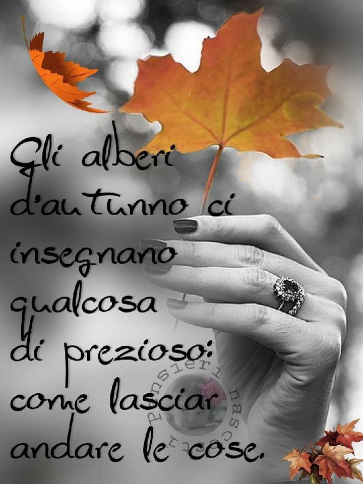Autunno immagine #3002 - Gli alberi d'autunno ci insegnano qualcosa di prezioso: come lasciar andare le cose. Immagine per Facebook, WhatsApp, Twitter e Pinterest.