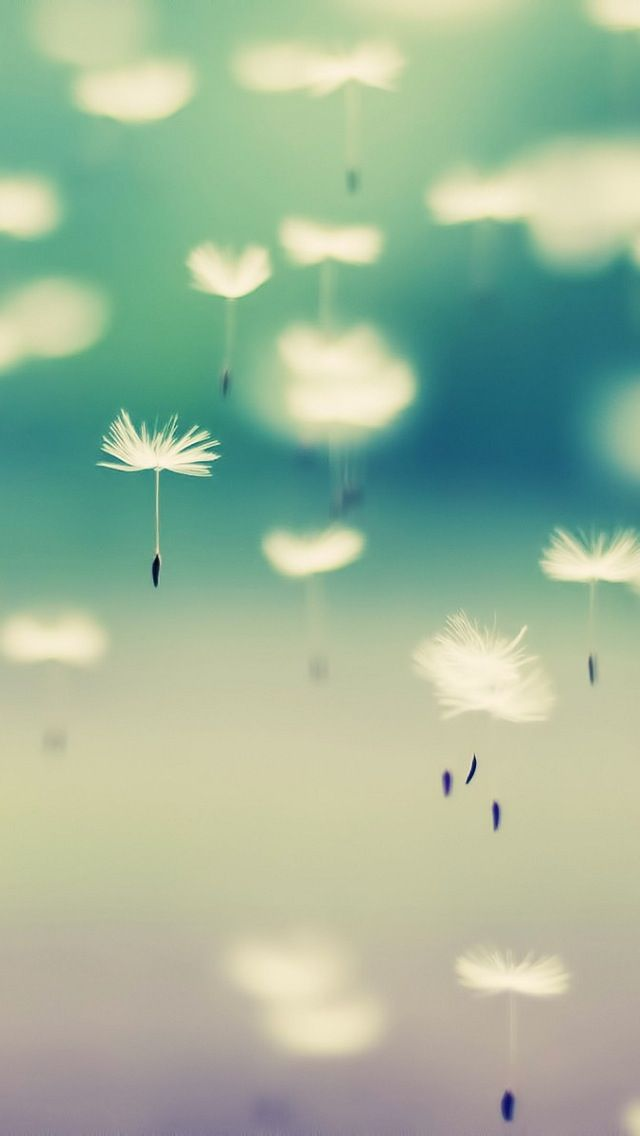 Great site for iphone wallpapers   Dandelions In The Air #iPhoneWallpaper
