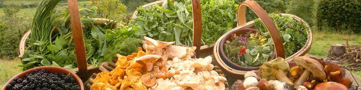 Wat is het paleo dieet? Dit dieet legt de klemtoon op 'echte voeding'. Hiermee wordt bedoeld voeding welke onbewerkt is, dus voedsel zonder toevoegingen.