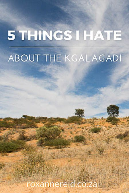 5 things I hate about the Kgalagadi Transfrontier Park #Kgalagadi #Kalahari #SouthAfrica #Botswana #safari #travel