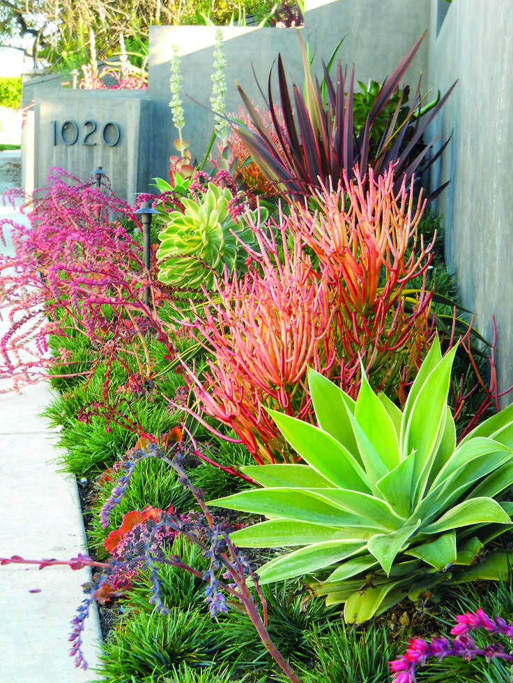 Best 25 tropical landscaping ideas only on pinterest for Front garden plant ideas