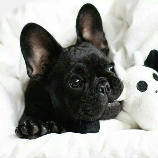Quelle merveille... At 2 am when everyone's asleep I am pinning pictures of puppies...