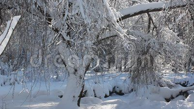 Winter scene in park - snow covered trees in a sunny frosty day.