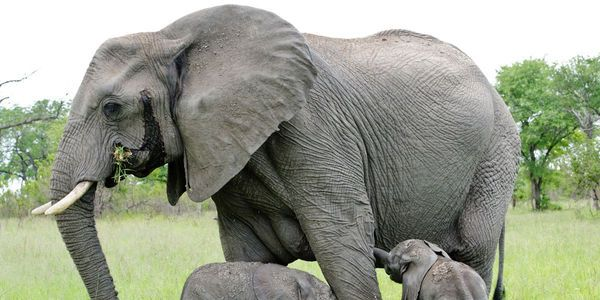 petition: stop illegal ivory trade