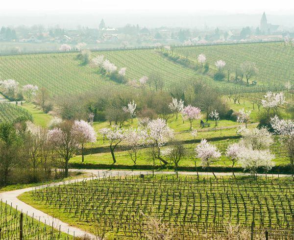 Urlaub für Genießer | Südliche Weinstrasse