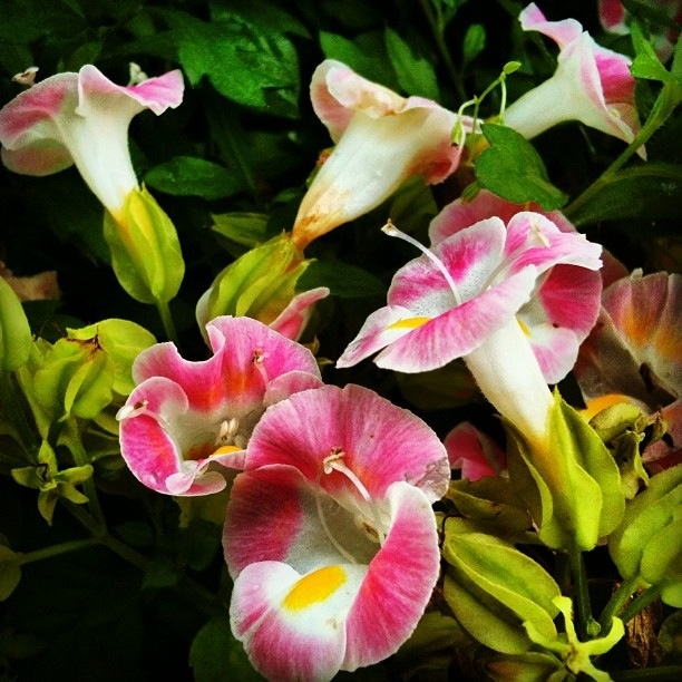 .. flower ... kembang .. 花  I took it in Mae Luang Fah, Thailand