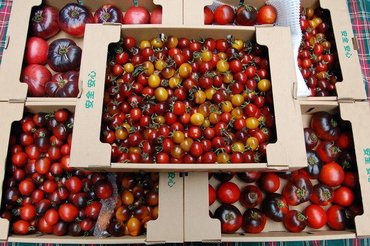 Heirloom & Blue Tomatoes for Shops & Markets エアルーム&ブルートマト・青果各種サンプル *お気軽にお問い合わせ下さい。