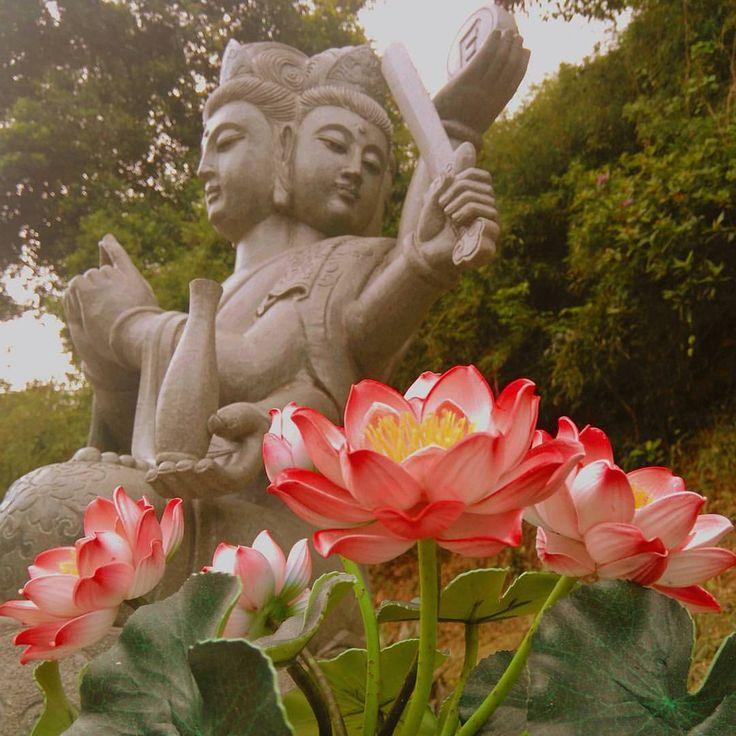 Flowers for Buddha Bekijk deze Instagram-foto van @loesensuusopreis • 181 vind-ik-leuks