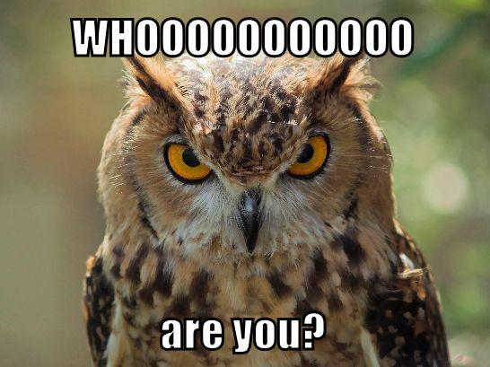 Funny Animals Meme Meme S Pinterest Funny Animals