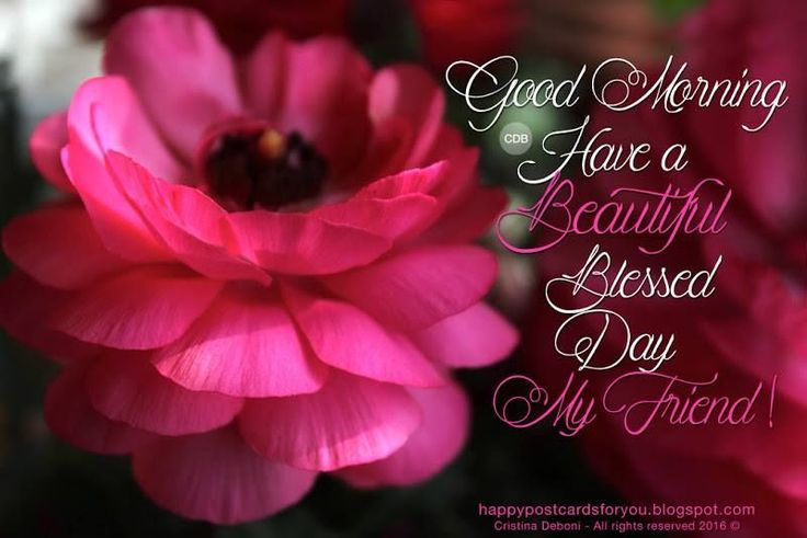 Good Morning My Beautiful Friend Quotes: 25+ Best Ideas About Good Morning Friends On Pinterest
