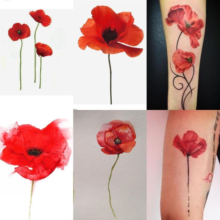 Slowly narrowing it down - simple black line stems, open flower facing forwards with a 2nd (maybe a 3rd) tilting in the breeze, black centers with watercolor red (no orange, yellow or green) flowers, Hugh and Poppy in delicate tiny cursive in the stems where the stems meet at the wrist @lokishanedefriece #tattooinspo #poppytattoo @calihowerton @mommyennui