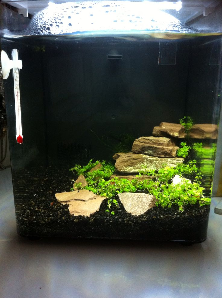 Aquascape for the nano aquarium with red shrimps shrimps for Shrimp fish tank