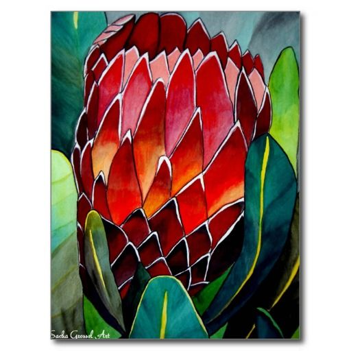 Red Protea flower original watercolour art with original art design from watercolour painting by Sacha Grossel of large, red Protea flower, naïve to South Africa and Australia. Bright and colourful design with red, orange and green.  http://www.zazzle.com/red_protea_flower_original_watercolour_art_postcard-239874068463781023?rf=238756979555966366&tc=PinLA  // Creating items is inspiring. Visit our gifts at http://www.zazzle.com/latinamericafocus?rf=238756979555966366&tc=PinLA