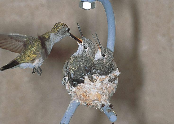 Duncraft.com: Hummingbird House