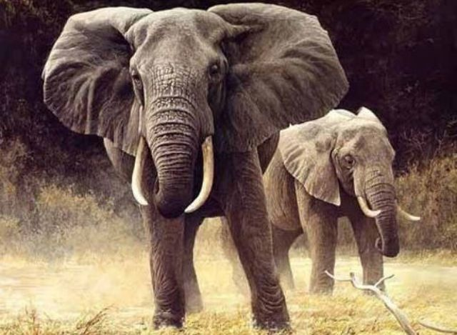 22 besten elefanten bilder auf pinterest elefanten. Black Bedroom Furniture Sets. Home Design Ideas