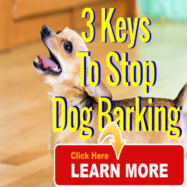 3 keys to stop the barking : Using this simple technique you can stop a dog barking. The key to continued success is to become the pack. Learn more http://mydog-training.com/