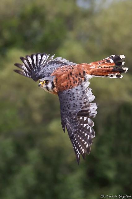 Do Eagle Fly At Night? - YouTube
