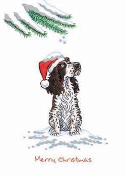 English Springer Spaniel Christmas Cards