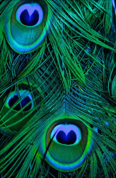 peacock emerald                                                                                                                                                     More
