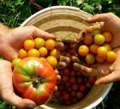 guia-basico-da-permacultura                                                                                                                                                                                 Mais