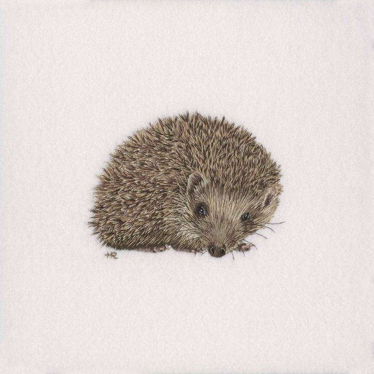 Original hand embroidery of a Hedgehog as part of my 'British WIldlife' collection. The piece took approximately 40 hours to complete using a blend of ten shade