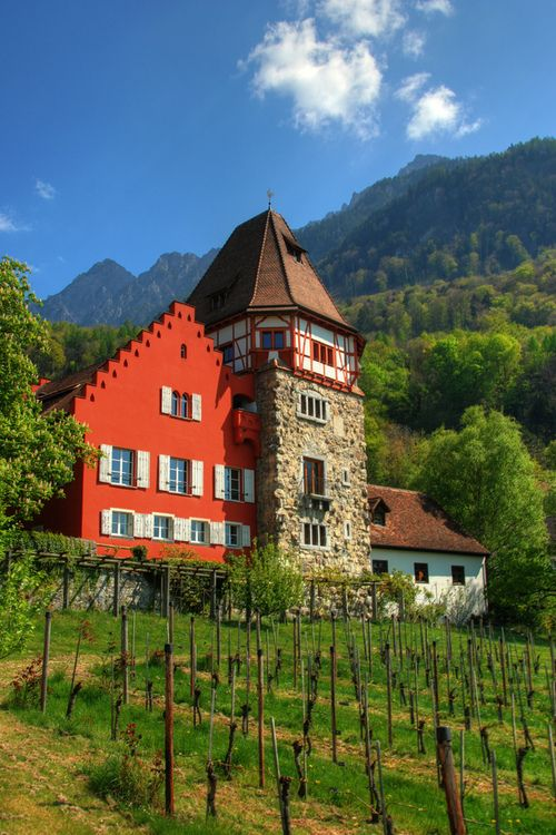 Vaduz vineyard. Vaduz is the capital of the principality of Liechtenstein and is located along the Rhine river in Central Europe.