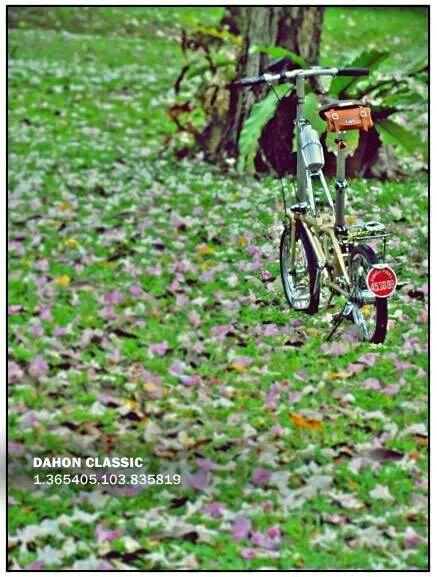 Dahon Classic