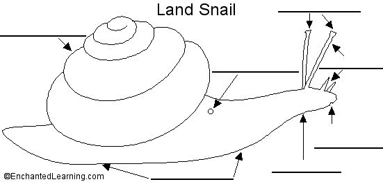 1000  images about snails on pinterest