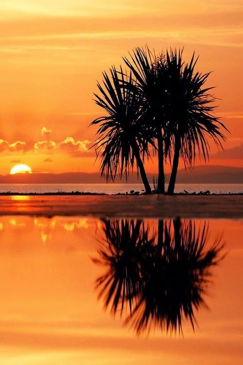 299 Best Palm Tree Stuff Images On Pinterest Palm Trees